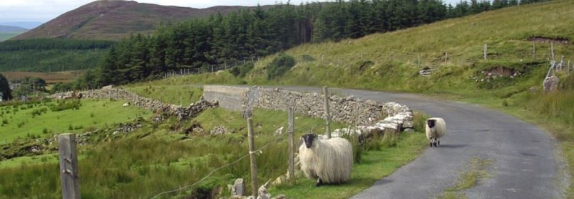 Cycling Tour of Dublin & Wicklow - Sheep